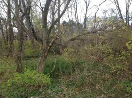 General vegetation