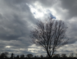A leafless tree silhouetted against a stormy sky