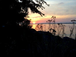 Sunset over water, with rocks, trees, and weeds in the foreground in silhouette