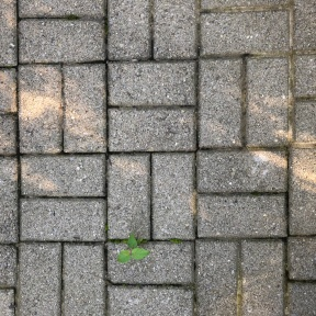 Rectangular vertical and horizontal lines between paving stones on my front walk; plus the tiny green leaves of a plant growing in the cracks