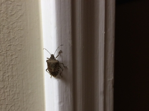 A bug with an intricately patterned brown shell creeps upward on the door molding