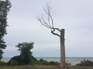 A dead tree on the beach, with the trunk chopped off 20 feet up and two twisted branches reaching into the air